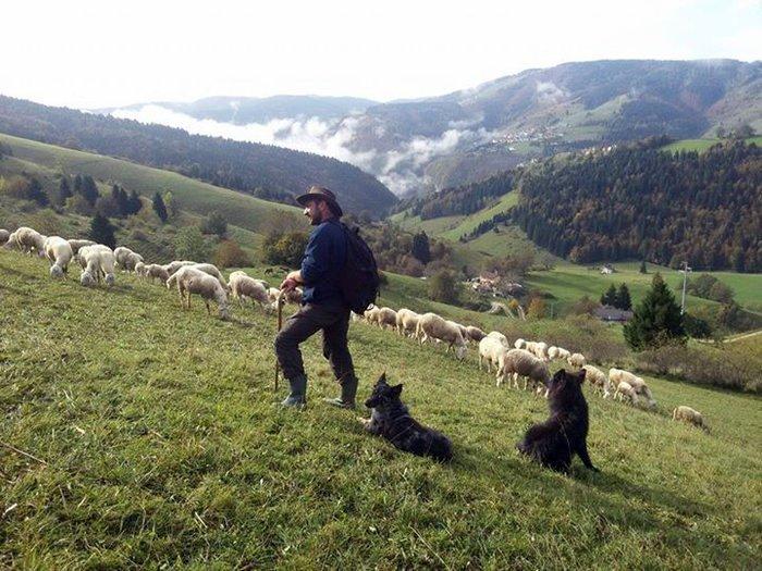 Tradizionale incontro di fine estate: omaggio ai funghi e alla selvaggina @ Ristorante Hotel Alpi di Foza | Foza | Veneto | Italia